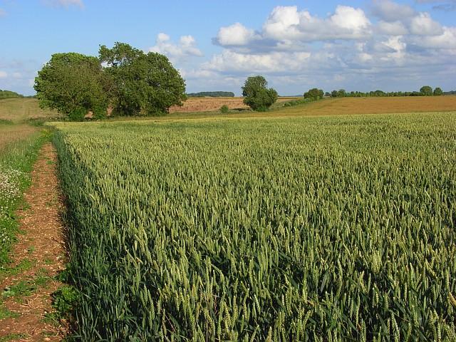 Farmland, Monxton