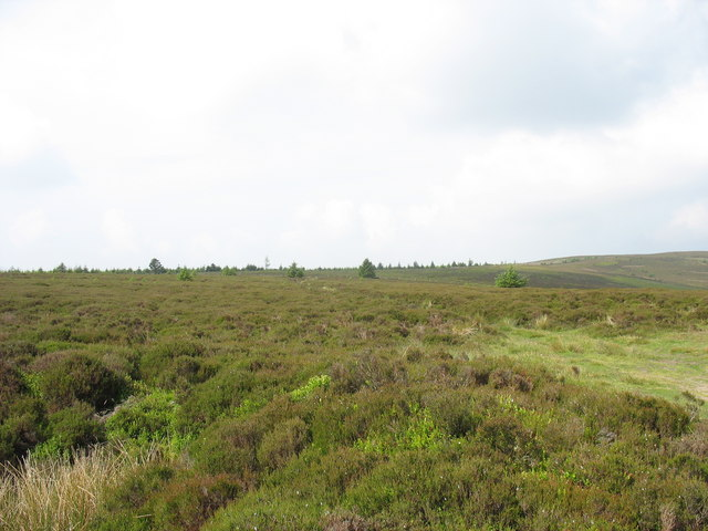 View upslope towards the forest on the ridge