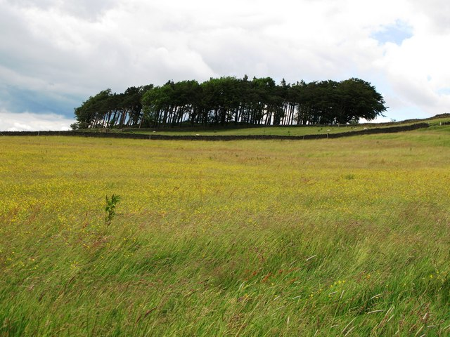 Meadow above Keenleyside Hill