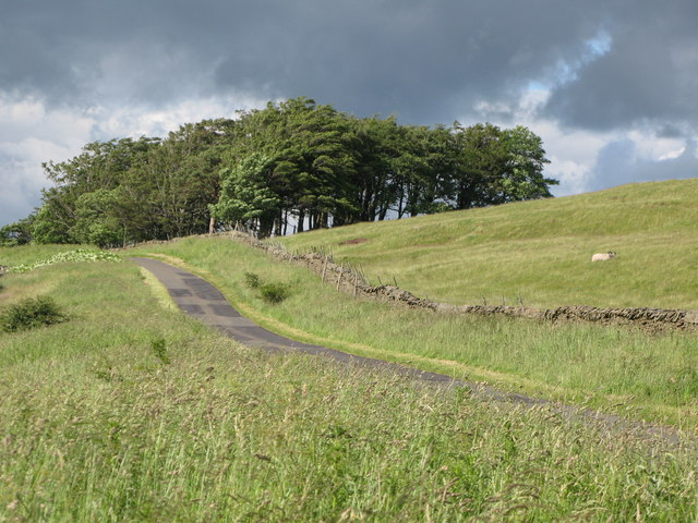Minor road and (unmarked) plantation near Keenleyfell West