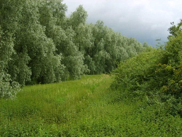 Bolton Percy river scene