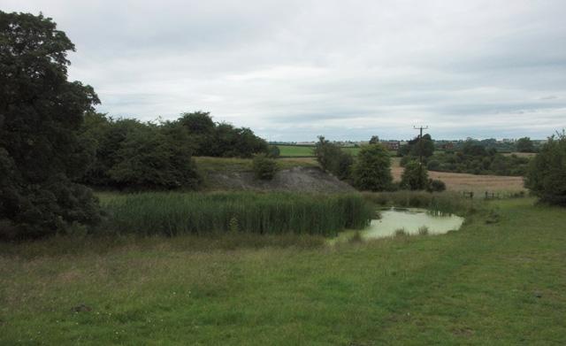 Overgrown pond near Dilhorne