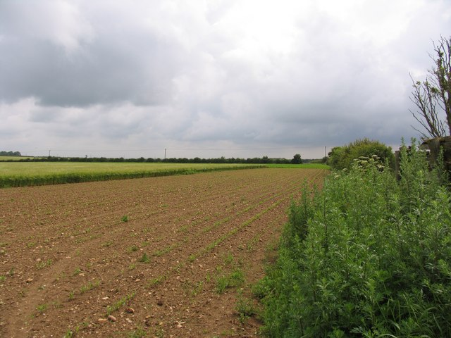 Fields to the East