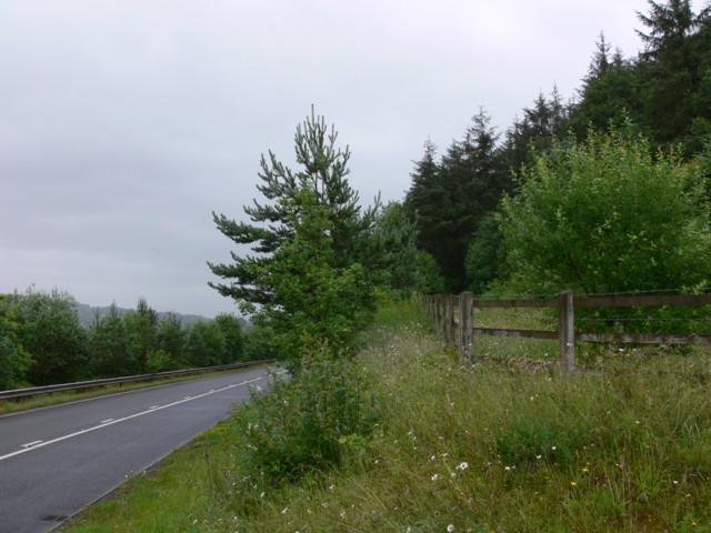 Pen-y-Wern Wood