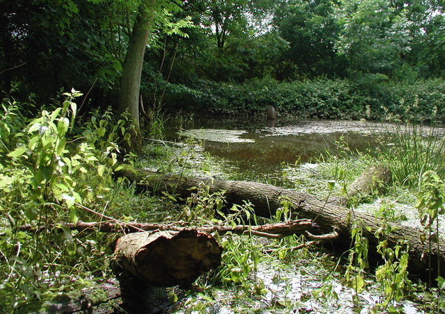 Swadgery Mere Wood