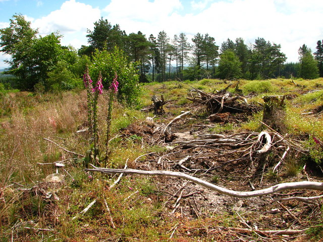 Beacon Hill Heathland Restoration Project