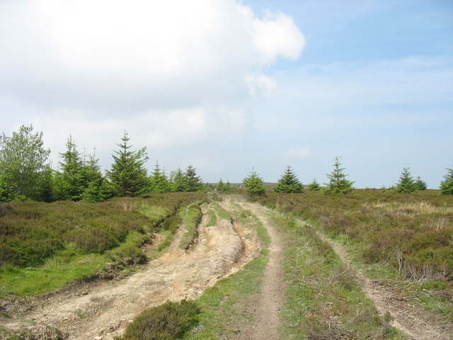 Eroded land-rover track on the ridge leading to Moel Fferna