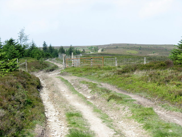 Gate and ffridd fence on the land-rover track