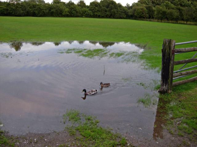 Flooded Field, near Stockton