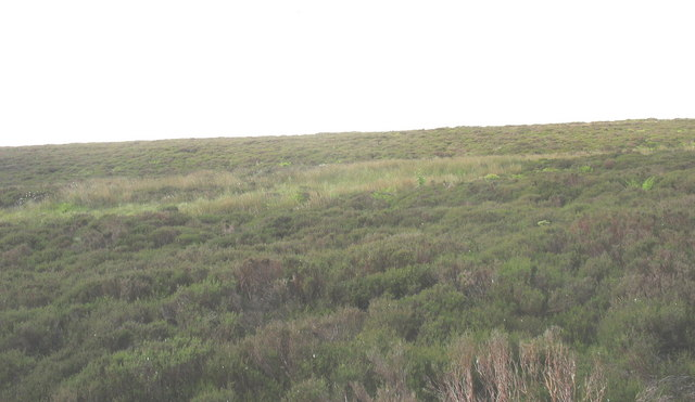 Heather-clad blanket bog