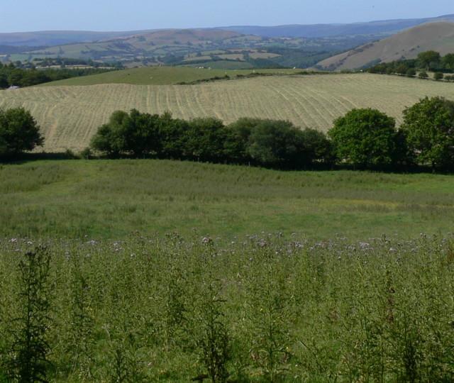 Haymaking at Dagfa