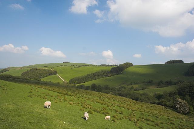Pasture near Beili farm