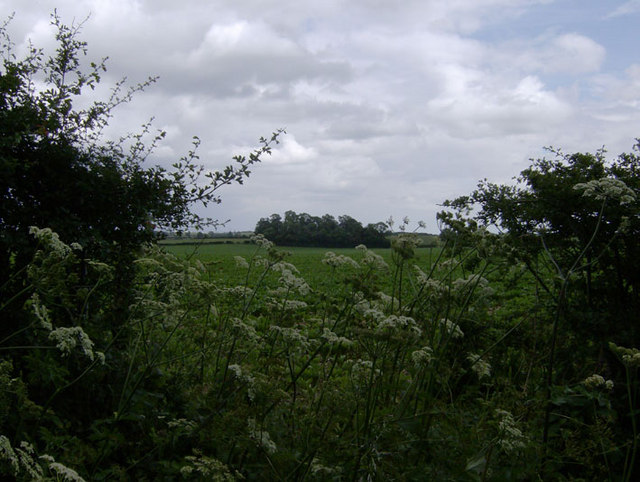 Grove near Grove Wold Farm