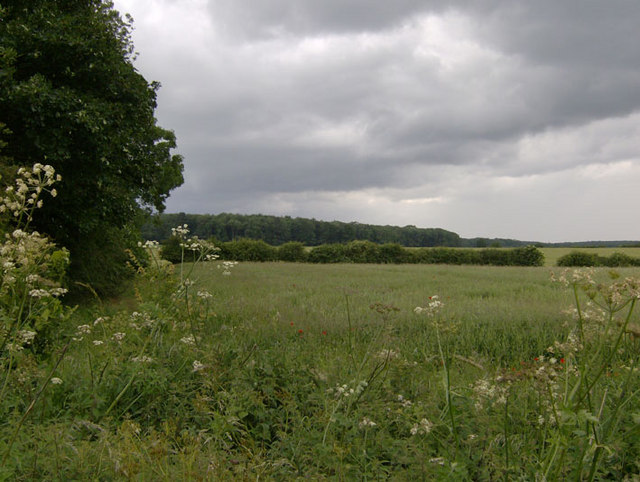 Looking towards the perimeter of New Close Wood, North Lincolnshire