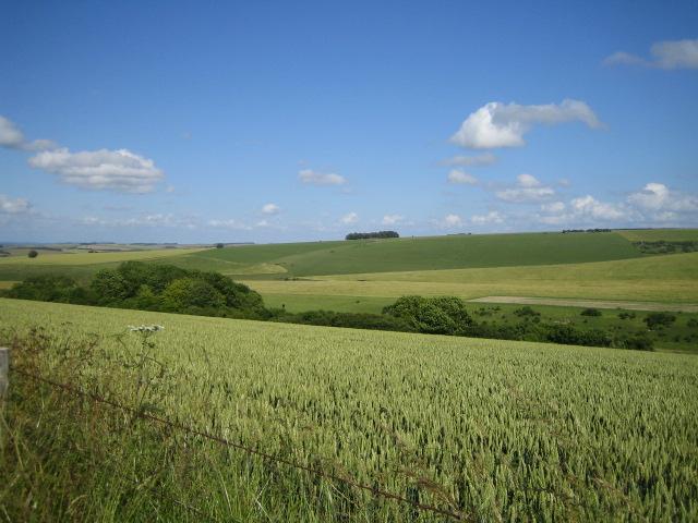 Wylye Down, near Wylye