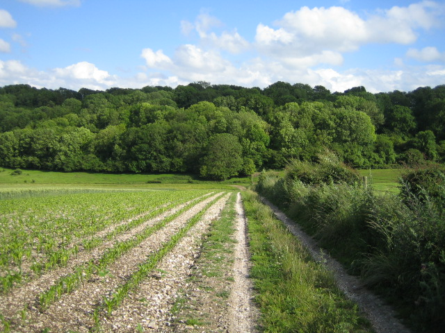 Fields and wood near Wylye 3
