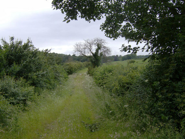 Old lane to Swallow Vale Farm