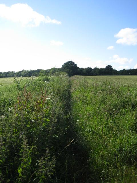 Bridleway near Down Farm, Chilmark 2