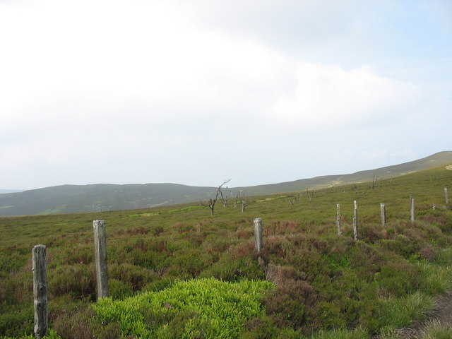 Heather moor with the remains of fire damaged trees