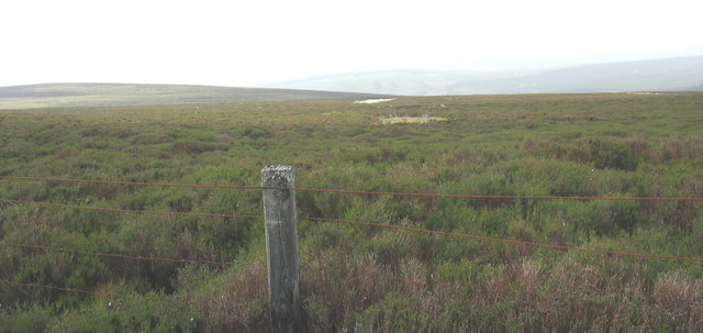Blanket bog with patches of cotton grass