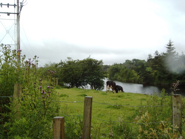 Cows by the River Irvine