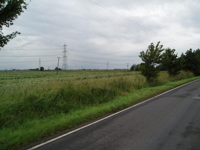 Rain damaged wheat near Livthorpe Kennels