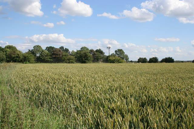 Farmland at Low Farm