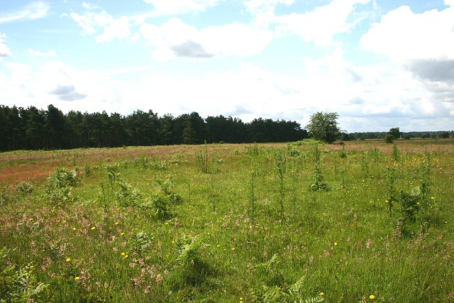 Open Access land near Warren Lodge