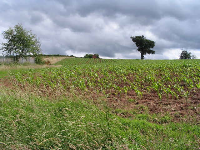 Field of maize, Sowe valley