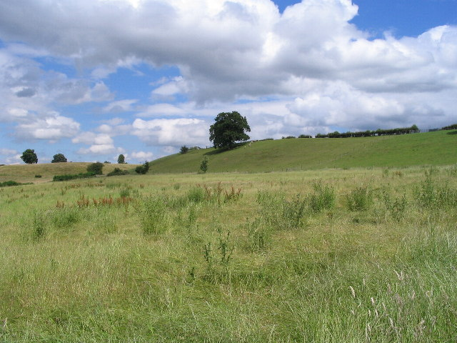 Grasses and grazing near Baginton