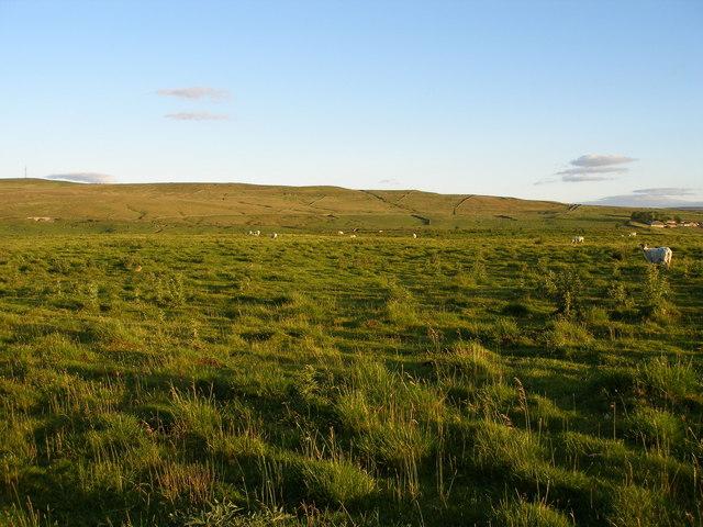 Slapestones, field view