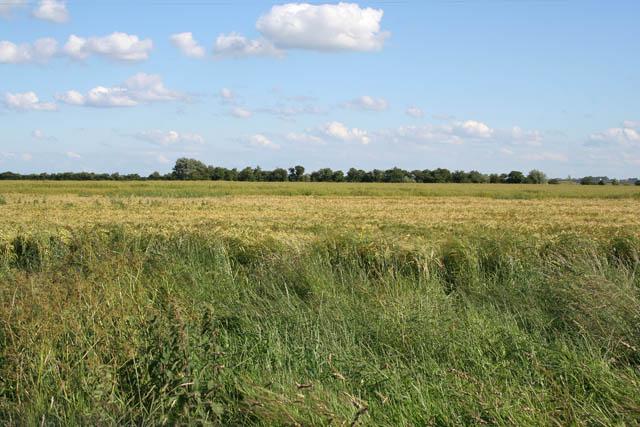 Lincolnshire Fens