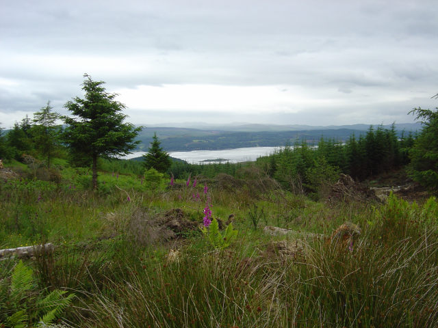 View from Lochgair to Lochgilphead forestry road in Achnaba forest towards Glas Eilean & Cowal.