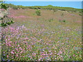 SW8837 : Wild flowers at Treluggan Cliffs by Robin Lucas