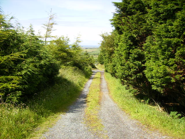 Track leading from the A3 near the 11th Milestone