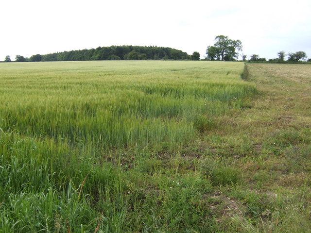 Edge of the barley