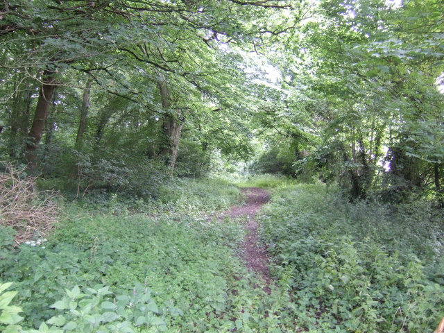 Fincham Drove through Scoot Wood