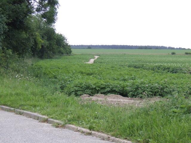 Potato field east of Chalk Lane