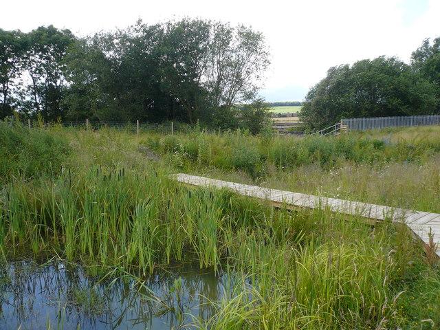Avenue Washlands Nature Reserve - Dragonfly Pond