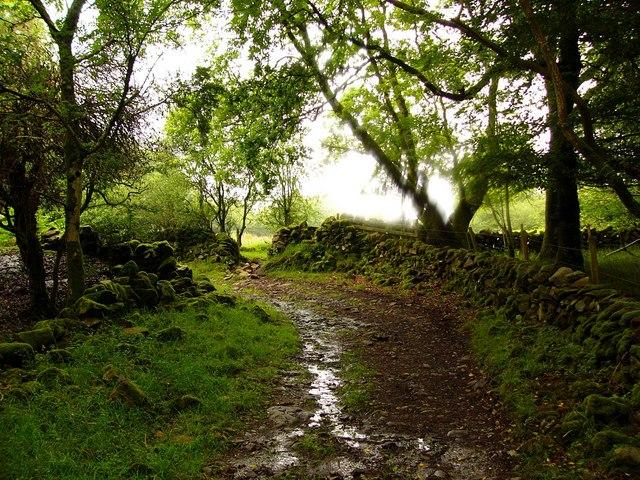 The road to Torhousemuir