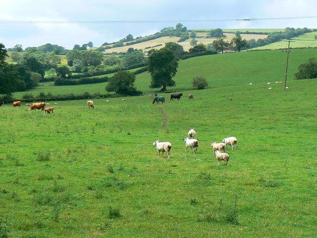 Pasture near Blackrock