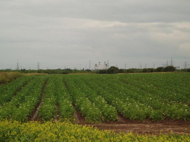 Potato field and new Plantation towards Keadby Power Station