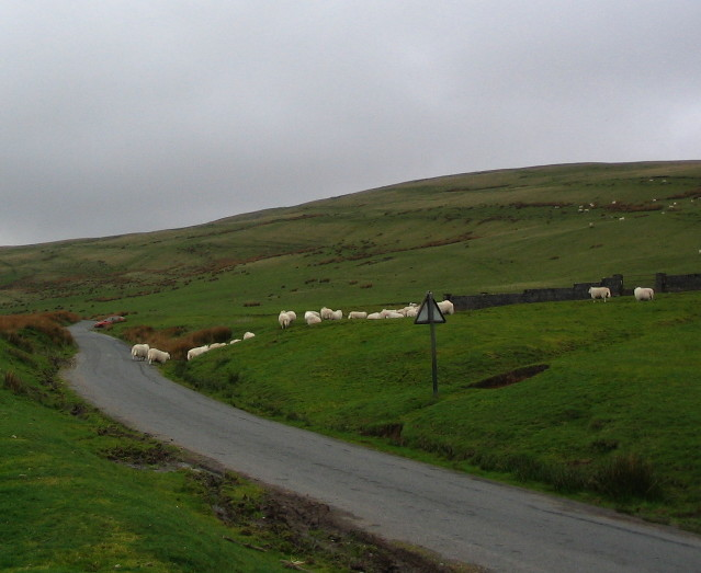 Mountainside Sheep Pens On Bwlch Cerrig Duon