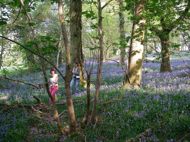 Maldry Wood