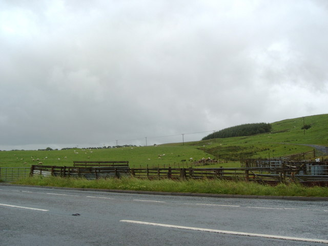 Sheep across the A76 from Waistland