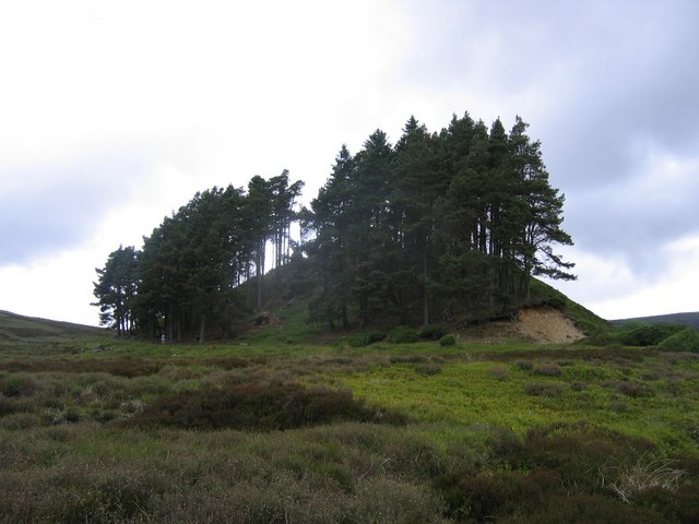 Pines on a knoll