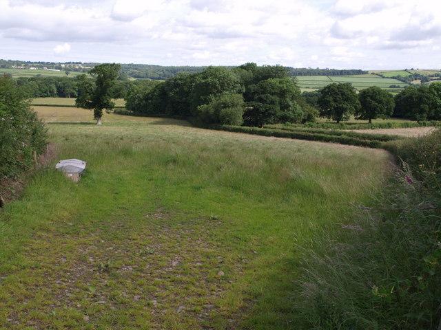Field above Luxton Moor