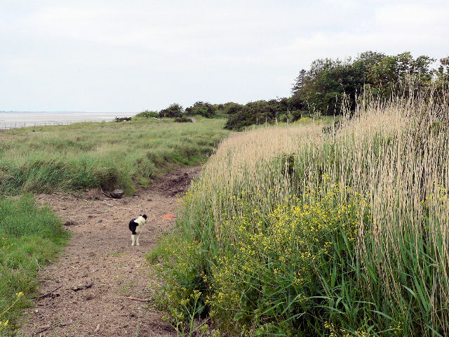 By the Solway Firth south of Dornock