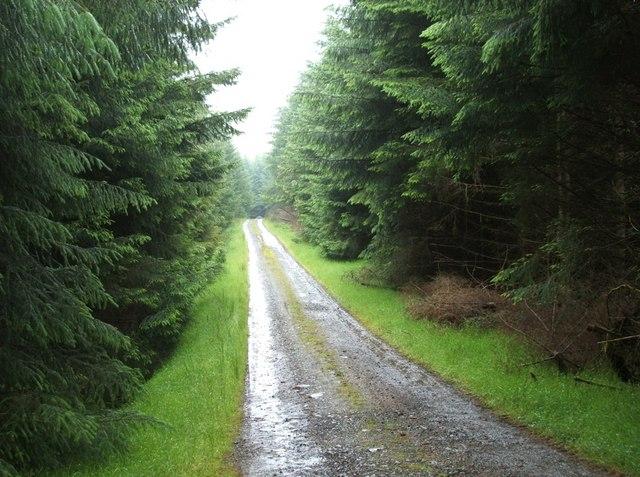 Cairnoch Forest