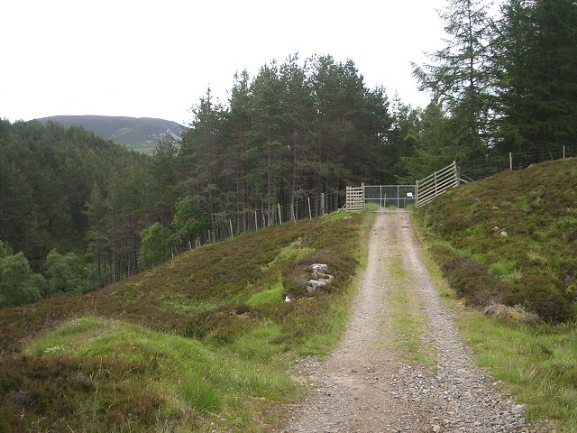 Entering forestry